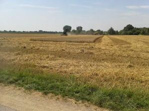 Getreide-Ernte