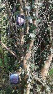 Ahnenbaum im Nemeton, mit Fotos meiner Großeltern